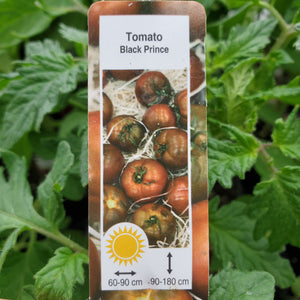 Tomato (Slicing) - Black Prince - Certified Organic