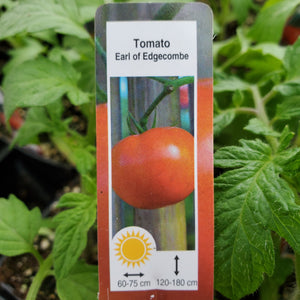 Tomato (Slicing) - Earl of Edgecombe - Certified Organic