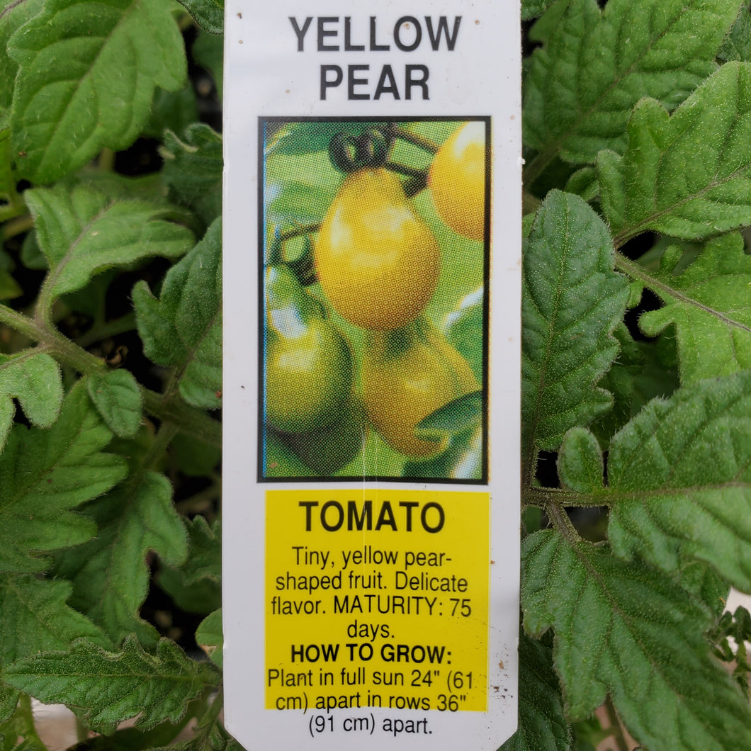 Tomato - Yellow Pear