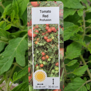 Tomato - Profusion Red