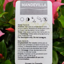 Load image into Gallery viewer, Mandevilla