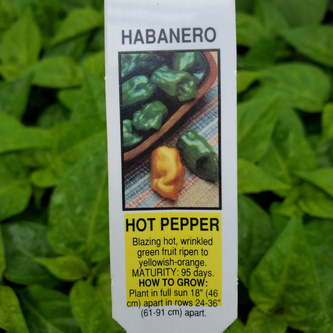 Pepper, Hot - Habanero