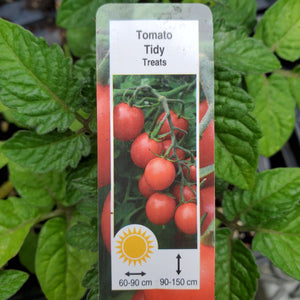 Tomato - Tidy Treats