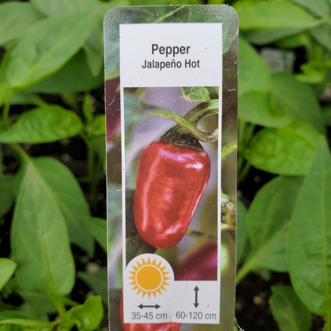Pepper, Hot - Jalapeno
