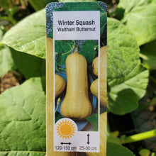 Load image into Gallery viewer, Squash, Winter - Butternut, Waltham - Certified Organic