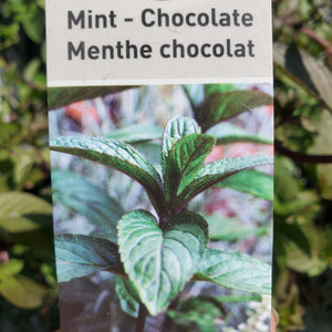 Mint - Chocolate