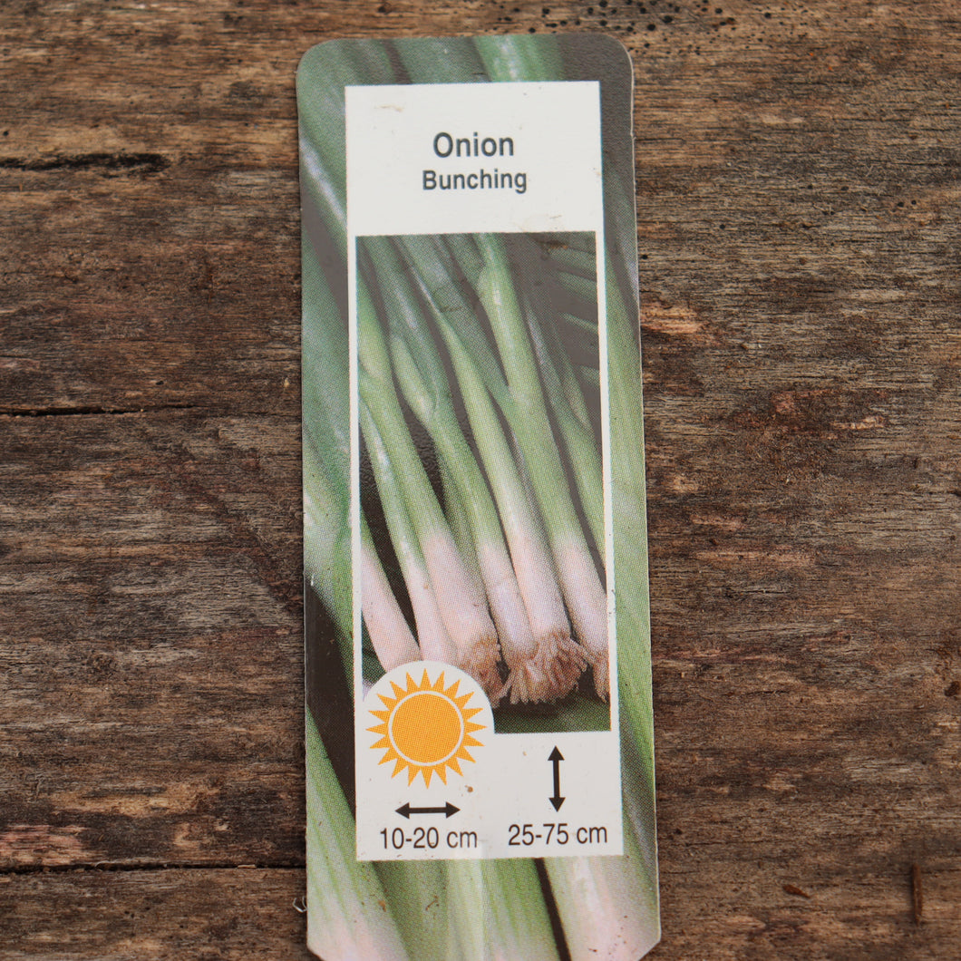 Onion - Evergreen Bunching - Certified Organic