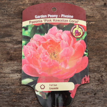 Load image into Gallery viewer, Paeonia 'Pink Hawaiian Coral' - Pink Hawaiian Coral Peony