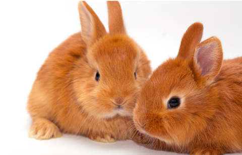 two bunnies sitting together