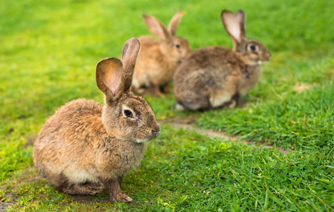 group of rabbits in the wild