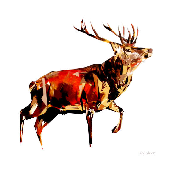 Red Deer - Prints - Queenie Browne