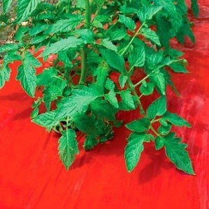 SRM Red Plastic Mulch 4' x 100' - JCM Greenhouse Mfg.
