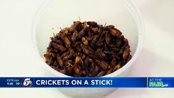 Roasted Flavored Crickets