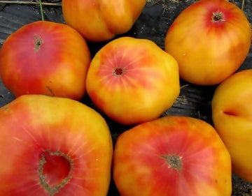 LYNNE LOVES: Tomatoes, Heirloom, Gold Medal