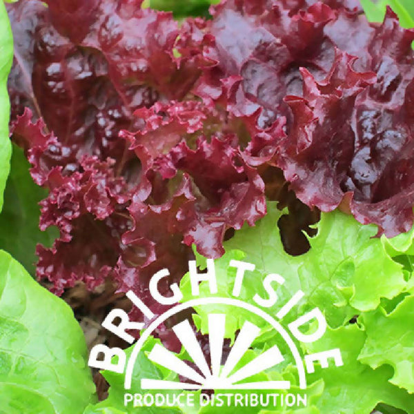 Lettuce (Red Leaf) (per unit) - Organic
