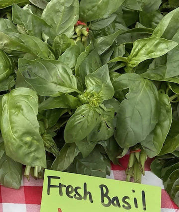 Fresh Basil, Bunch