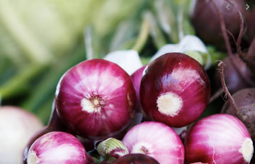 Red Onion, Small