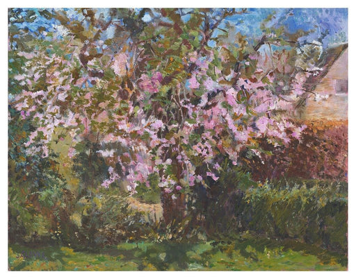 Cherry tree Art Print. Art Print from an original painting of a Cherry Tree. The painting shows a cherry tree in blossom with blooming flowers. Painted by Judi Glover using Oil paints on canvas board.