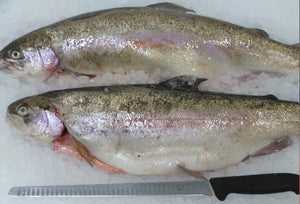 Trout, whole Bibury , portion sized, pack of 4 fish