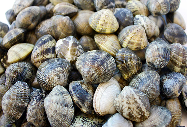 Clams, palourde, fresh, (live in 1kg bag)