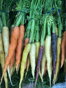 Carrots, Mixed Rainbow (Heritage) Bunched