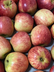 Royal Gala Apples  x 6