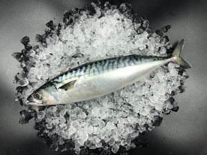 Mackerel , whole gutted fresh  (270-350gm each) (pack of 2)