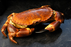 Crab, live large 1 kg  -1.5 kg  for two to share