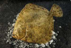 Turbot, farmed, fresh,  2-2.5kg