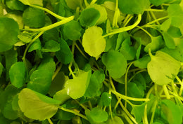 Watercress 100grm