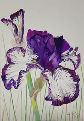 ORIGINAL WATERCOLOUR OF PURPLE IRIS - ANDREW LOGAN 2012
