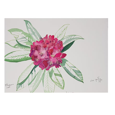 ORIGINAL WATERCOLOUR OF RHODODENDRON, INDIA - ANDREW LOGAN 2007
