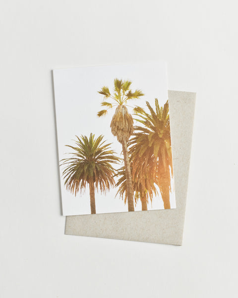 Photo greeting card of palm trees in bright sunshine.