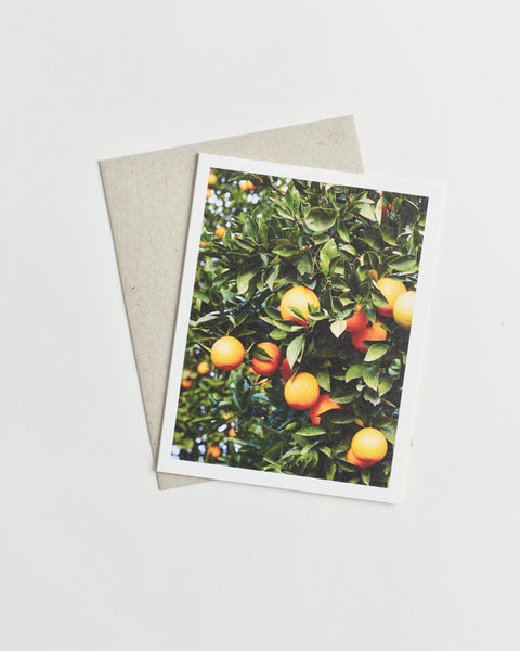 Photo greeting card of an orange grove tree.