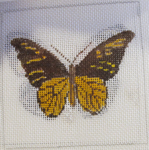 Set of 4 Butterfly Coasters