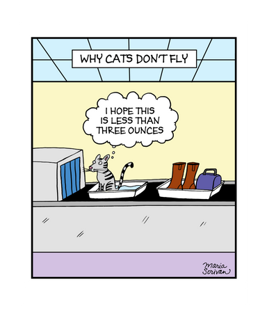 Why Cats Don't Fly Print