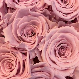Ballerina Pink infinity rose colour | Bling Blooms