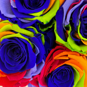 Carnival Rainbow infinity rose colour | Bling Blooms
