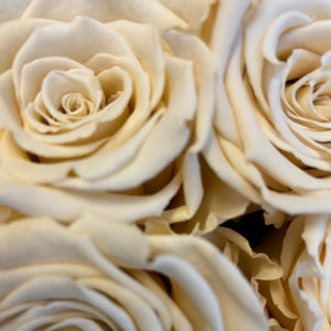 Champagne Bliss infinity rose colour | Bling Blooms