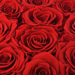 Eternity Red infinity rose colour | Bling Blooms