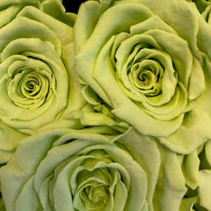 Mint Green infinity rose colour | Bling Blooms