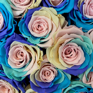Pastel Rainbow infinity rose colour | Bling Blooms