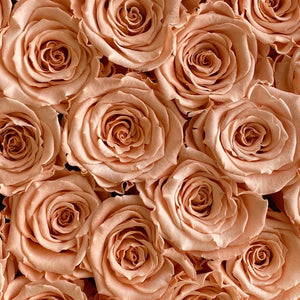 Perfect Peach infinity rose colour | Bling Blooms