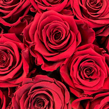 Load image into Gallery viewer, Romantic Red infinity rose colour | Bling Blooms
