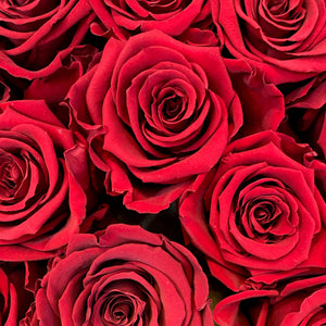 Romantic Red infinity rose colour | Bling Blooms