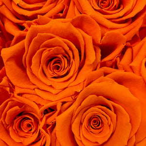 Zesty Orange infinity rose colour | Bling Blooms