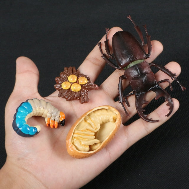 Butterfly Growth Cycle Bee Ladybug Spider Life Cycle Models Simulation Animal Model Action Figures Teaching Material For Kid