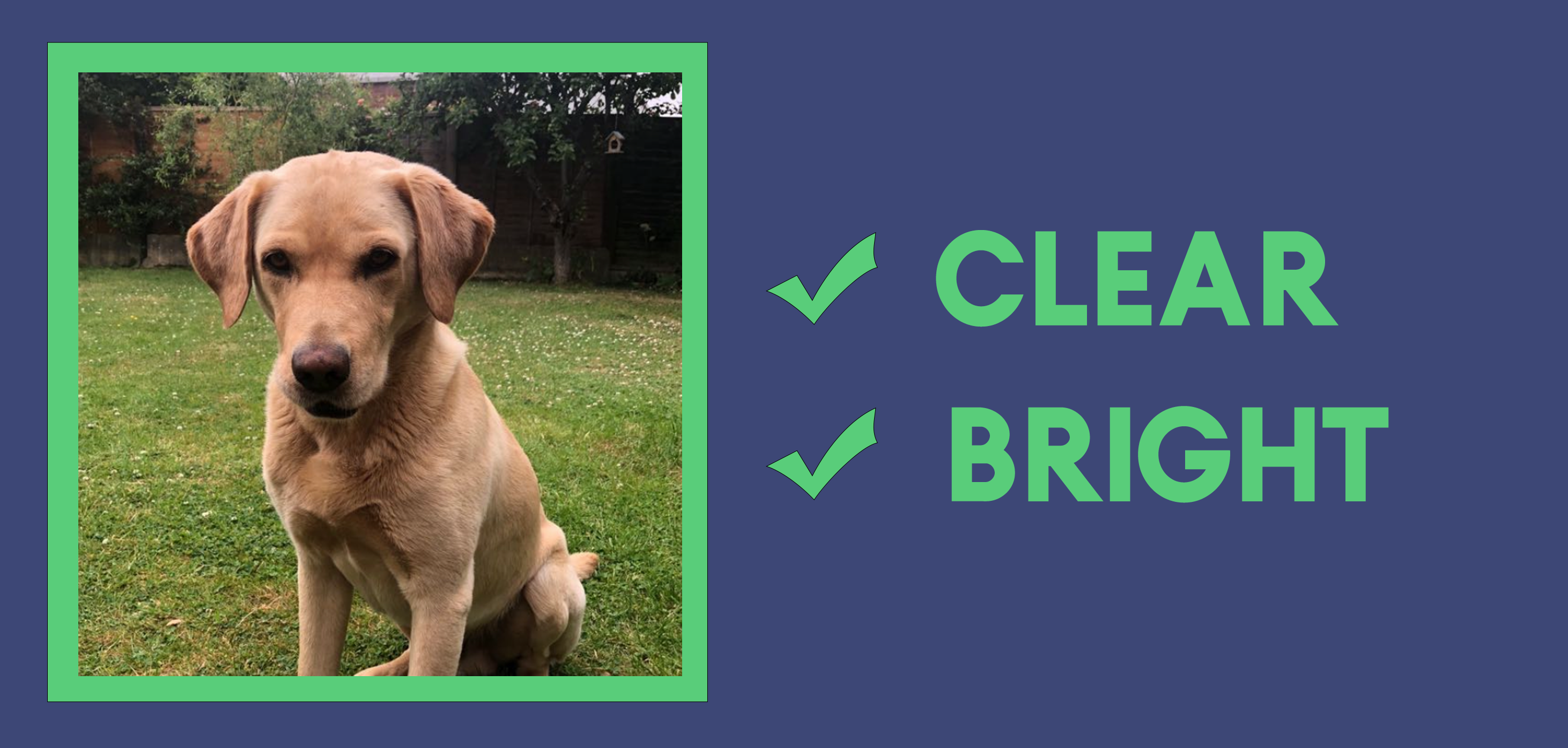 photo guide for custom pet products