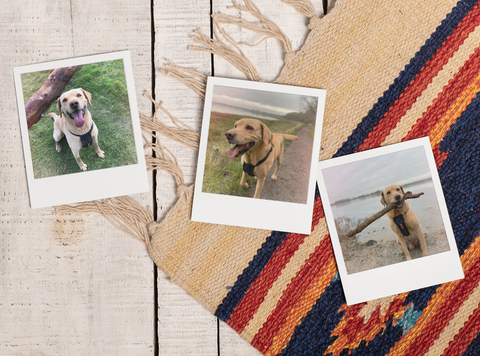 Choose a photo for custom pet portrait