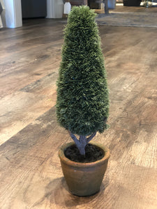 Cypress Topiary in Pot 13.5""